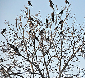 birds-in-the-park